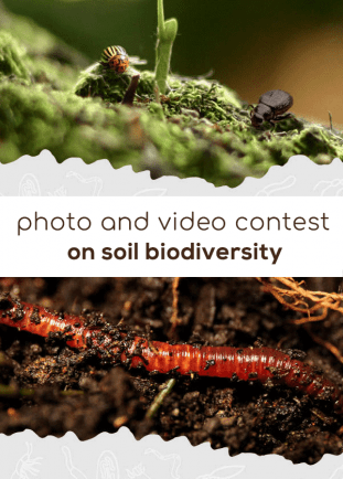 Photo and video contest on soil biodiversity